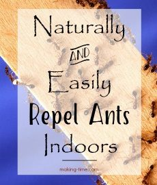 Naturally & Easily Repel Ants Indoors